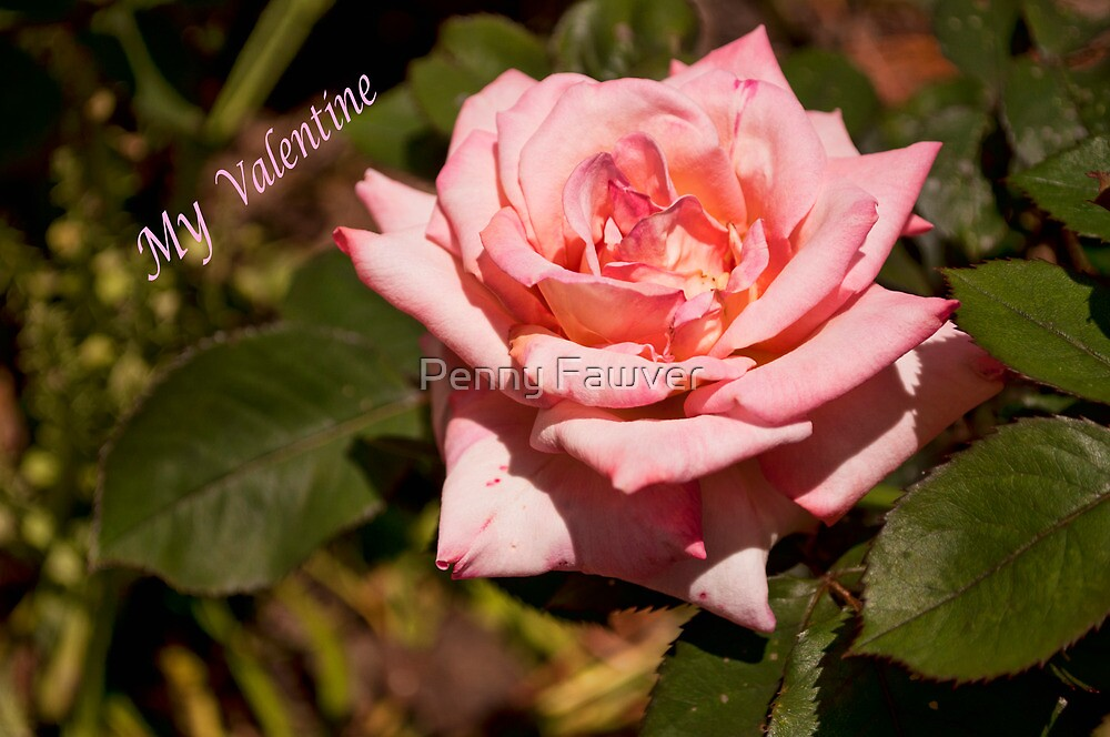 My Valentine Rose by Penny Fawver