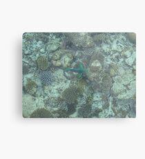 Corel Fish Metal Print