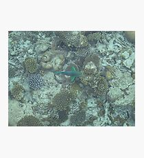 Corel Fish Photographic Print