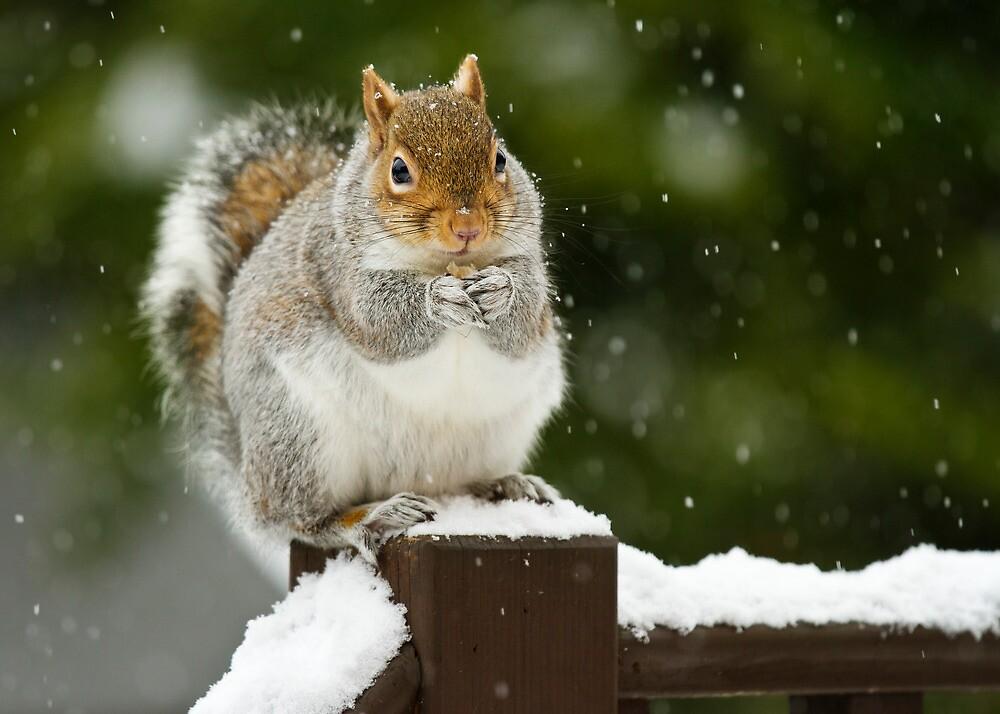 Winter Snack by Gareth Spiller