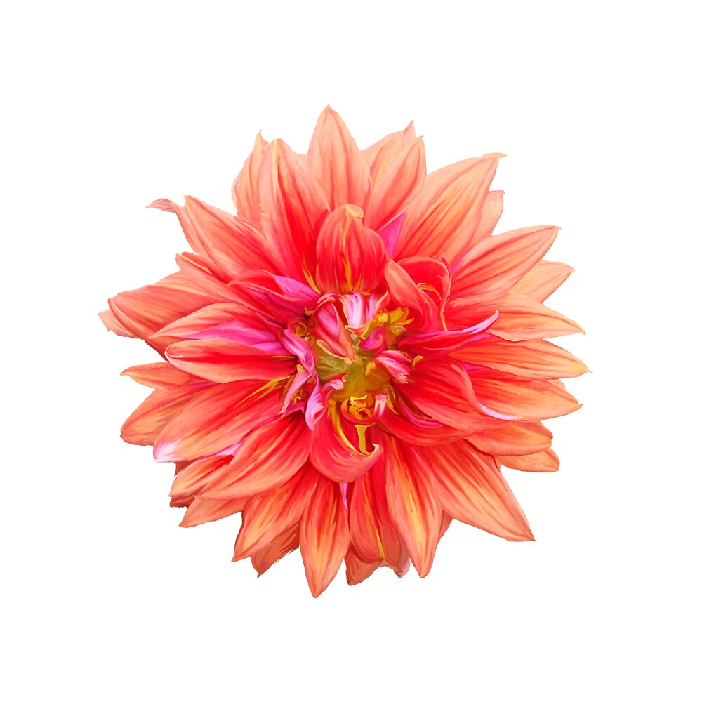 Dahlia Bloom by annioli