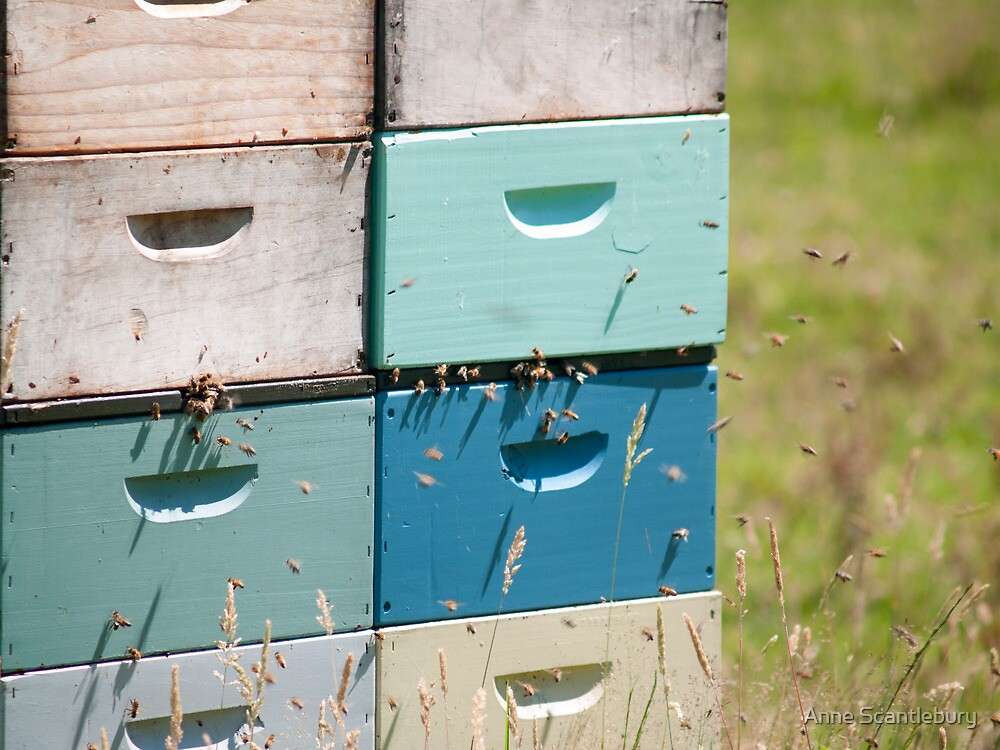 beehives 5 by Anne Scantlebury