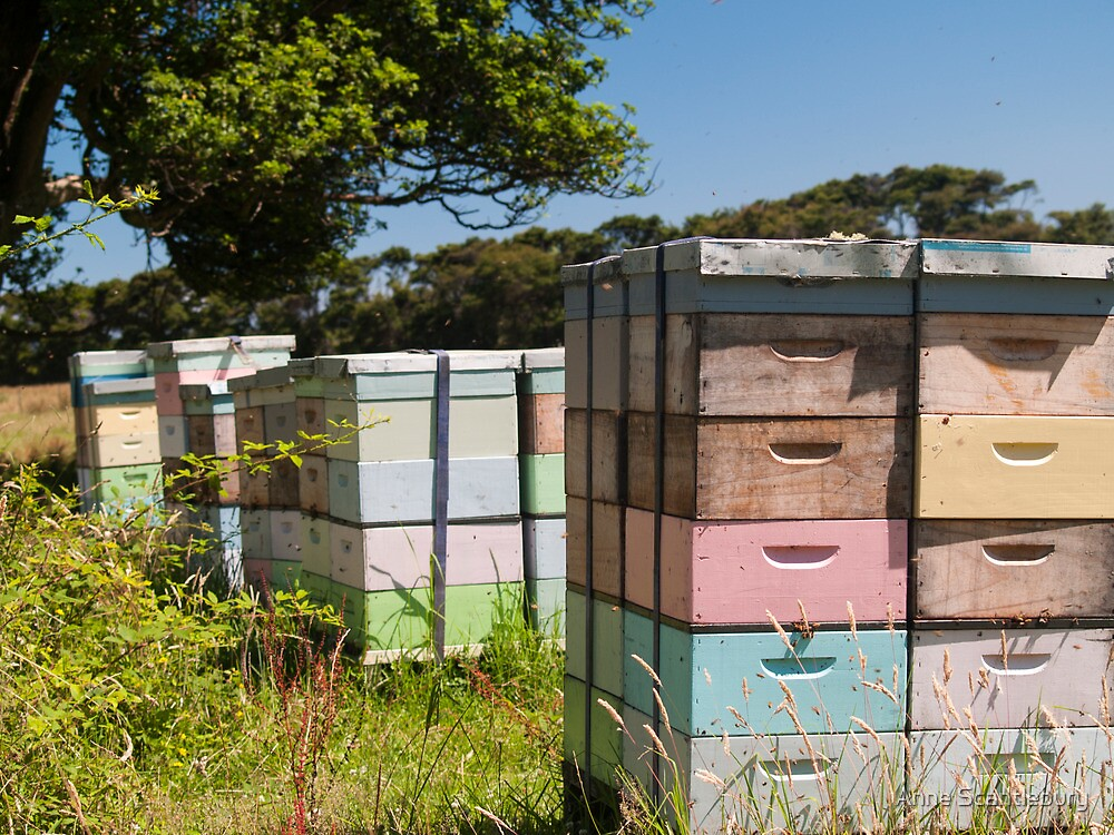 beehives 7 by Anne Scantlebury