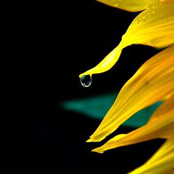 Dew diamond by Lukesta