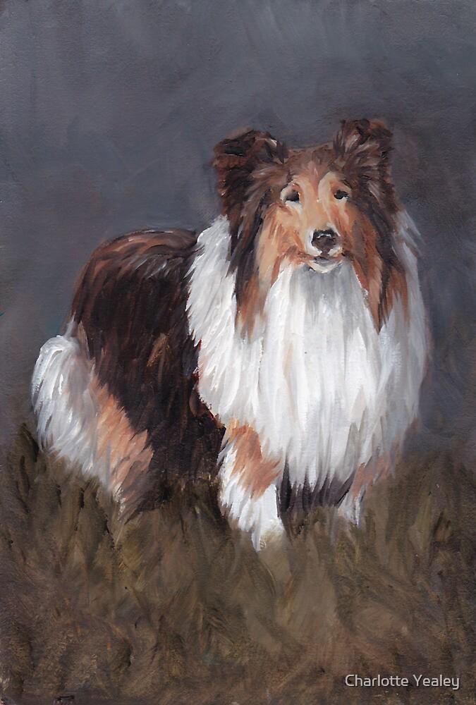 Shetland Sheepdog by Charlotte Yealey