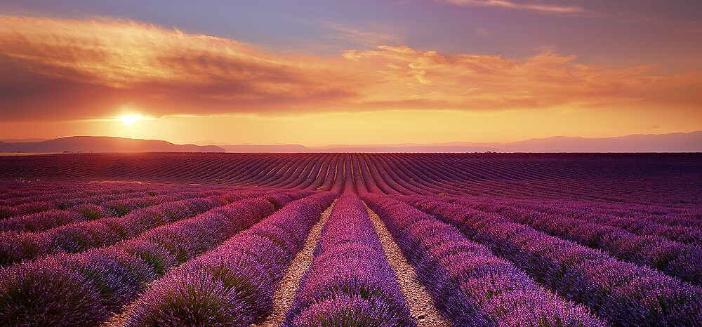 Lavender Fields - Limited Edition Fine Art Photograph by Jarrod Castaing