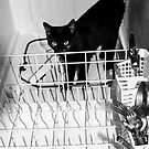 What? This Isn't A Cat Washer?? by Heather Friedman