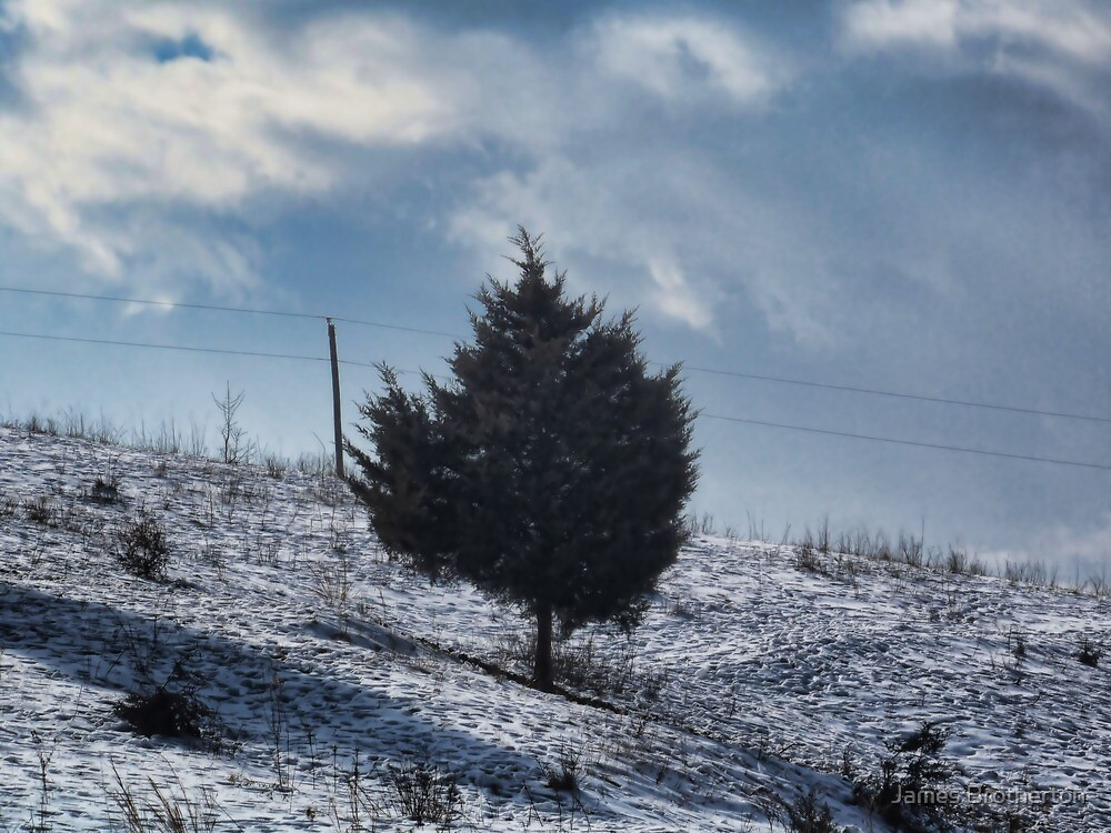 Tree On The Hill by James Brotherton
