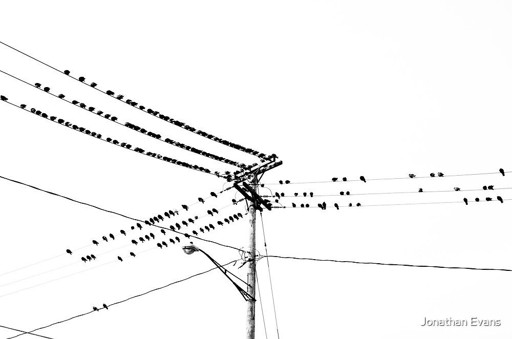 Birds on a wire by Jonathan Evans