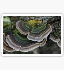 Bracket fungus Sticker