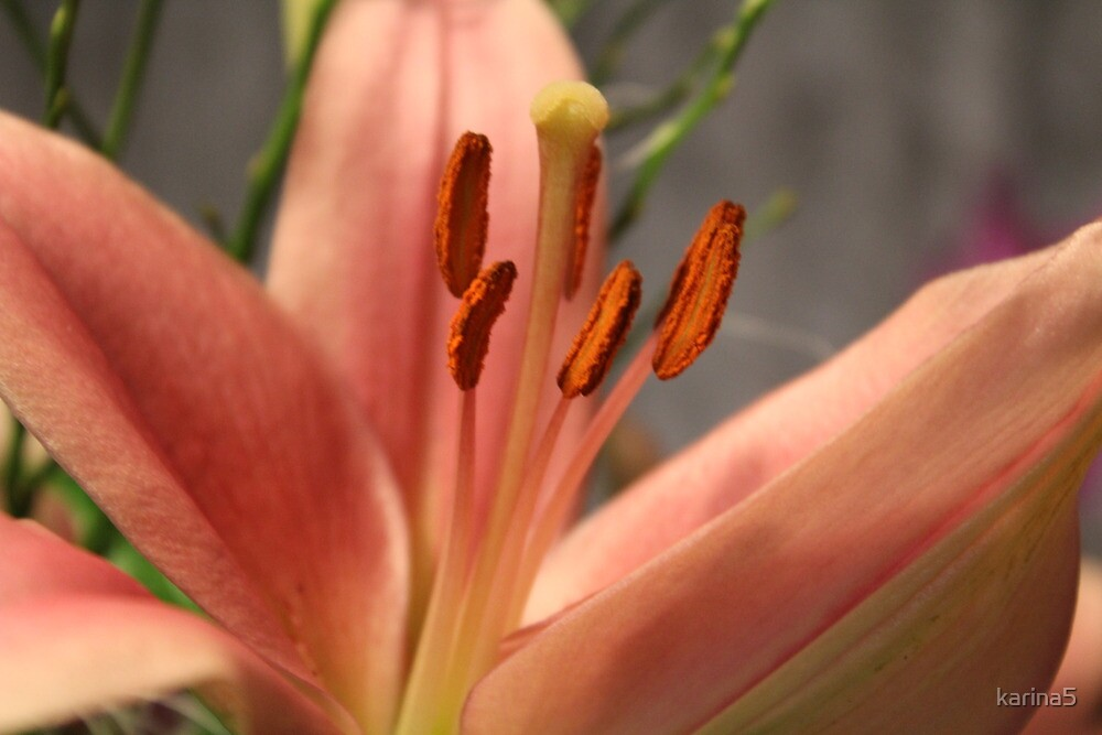 Petals & Pollen by karina5