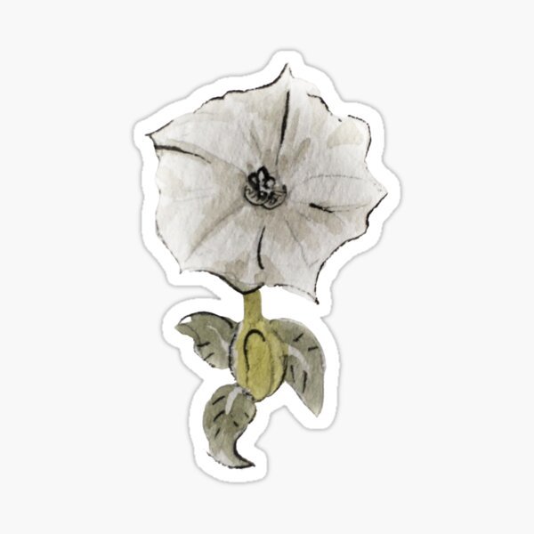 Datura Flower for Witchy Dreams in Watercolor  Sticker
