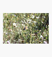 La Farfalla nei Fiori Photographic Print