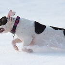 Molly loves the Snow by Mark Cooper