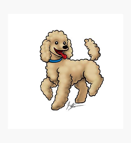 Poodle Brown Photographic Print