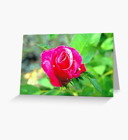 Hot pink rosebud Greeting Card