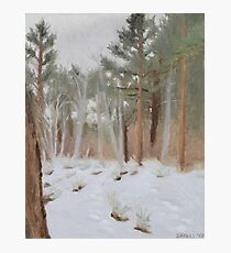 Galena Creek Forest (Plein-air Study) Photographic Print