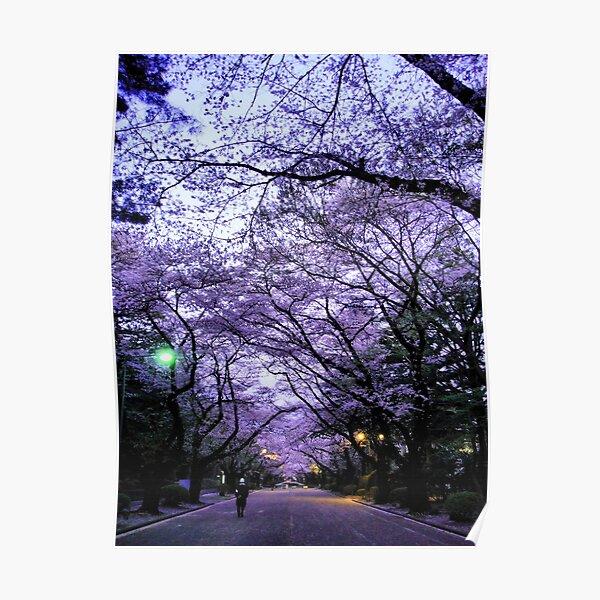 Sakura Walk Poster