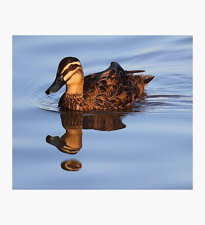 """Strange Fowl Reflections"" Photographic Print"