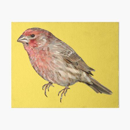 Red Finch Art Board Prints Redbubble