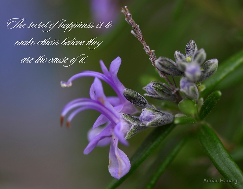 Happiness by Adrian Harvey