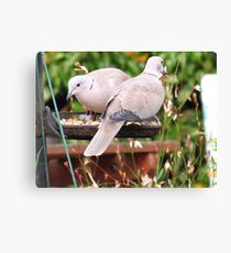 Two Doves Eating Bird Seeds Canvas Print