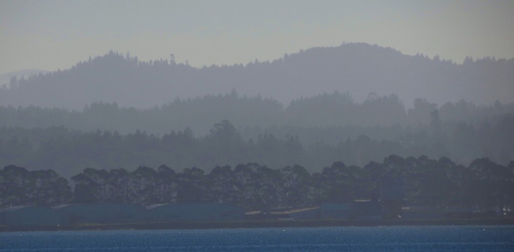 Humboldt Bay afternoon by Alex Call