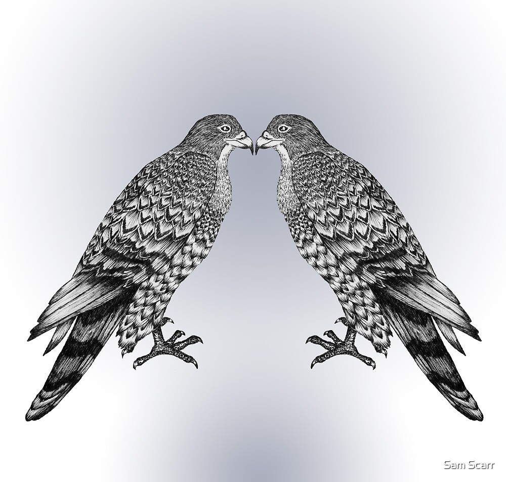 Falcon Pair by samclaire