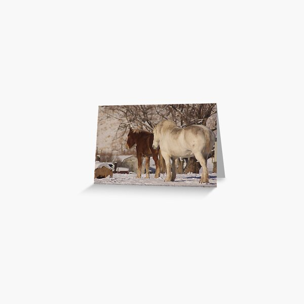 Lucky & Willow Greeting Card