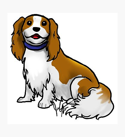 King Charles Cavalier Terrier Photographic Print