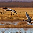 Landing Gear by Marvin Collins