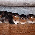 4 Little Birds by Alastair Creswell