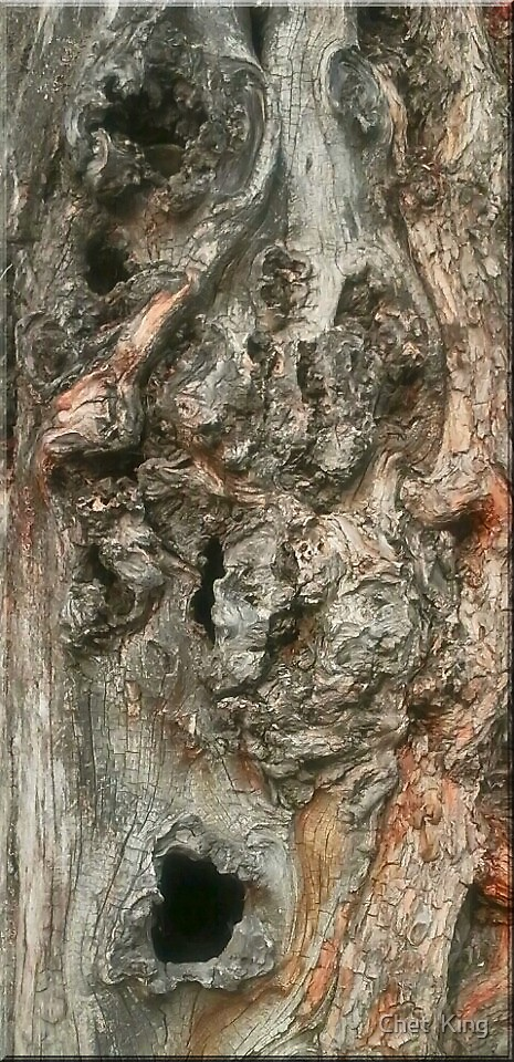 Tree Face by Chet  King