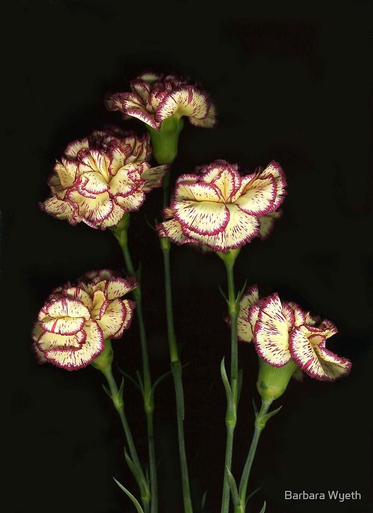 Carnations by Barbara Wyeth