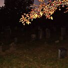 Branch In The Sunset Glow, Sleepy Hollow by Jane Neill-Hancock