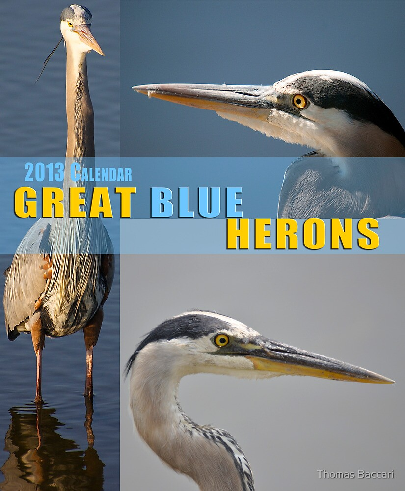 Great Blue Heron Calendar Cover by TJ Baccari Photography