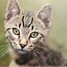 Angus the Kitten by Tamara Brandy
