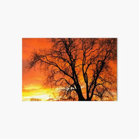 Orange Ash Tree Sunset Art Board Print