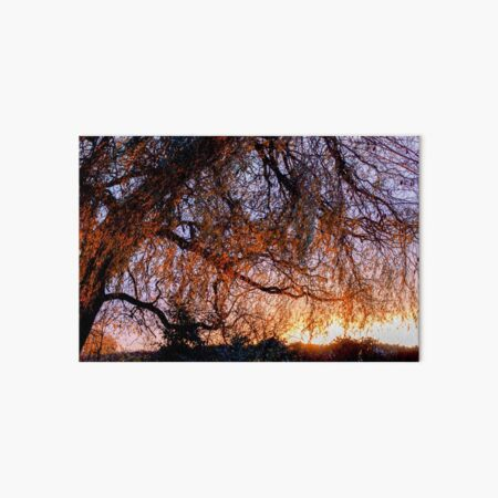 Willow Tree Sunset Art Board Print