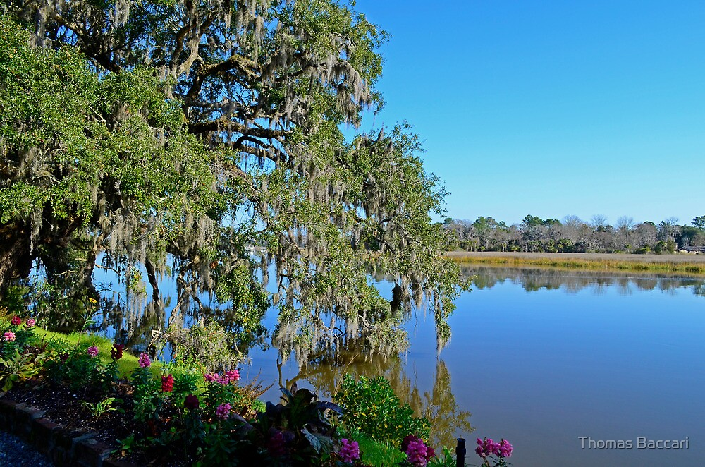 The River Scene in January - South Carolina by TJ Baccari Photography