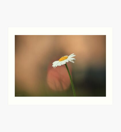 The Daisy and the Tail Light Art Print