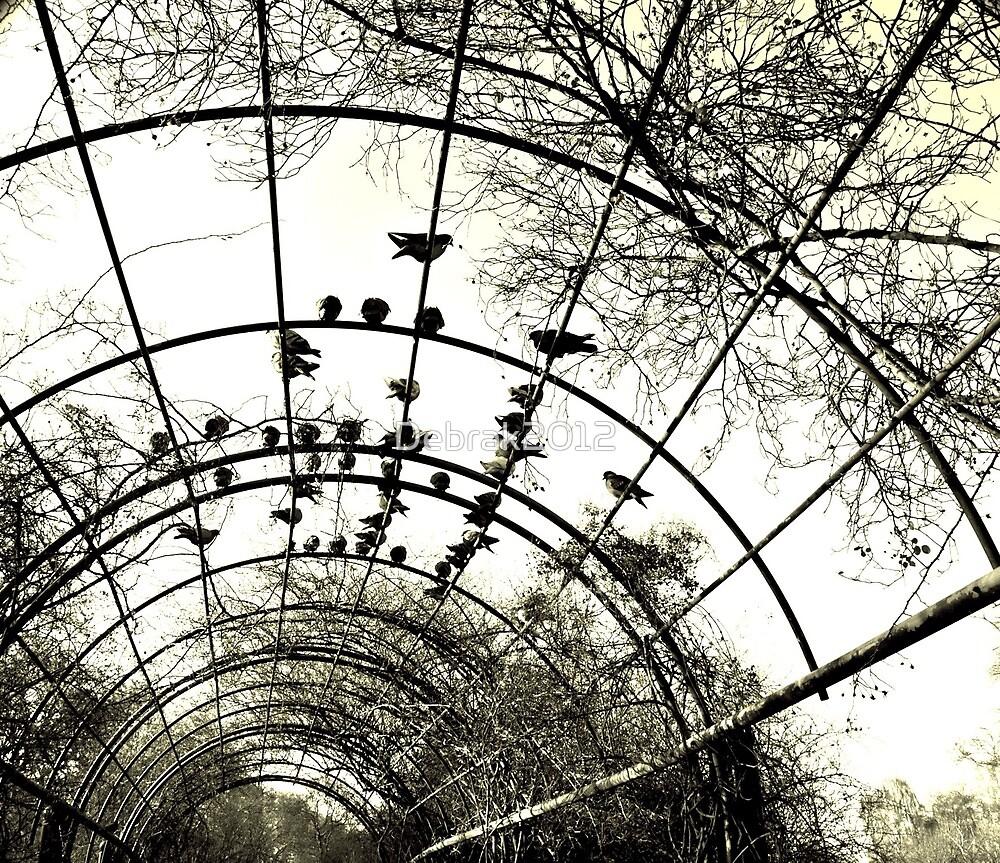 Birds on a wire  by Debra Kurs
