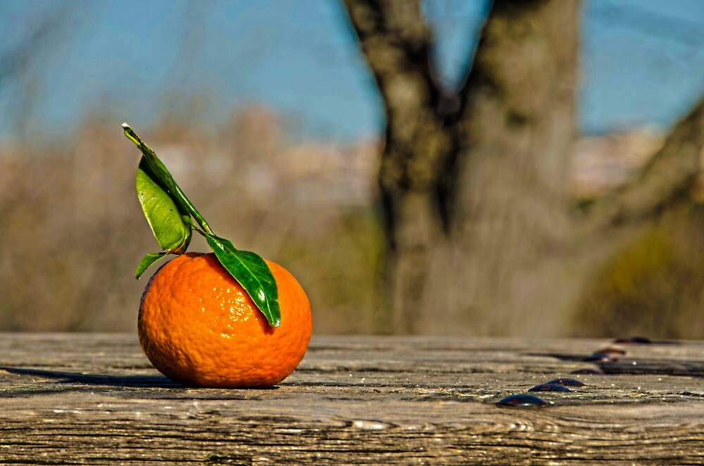 orange! by ronnyvan