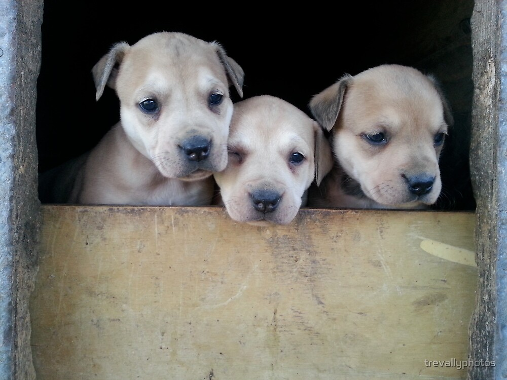 Puppies in kennel by trevallyphotos