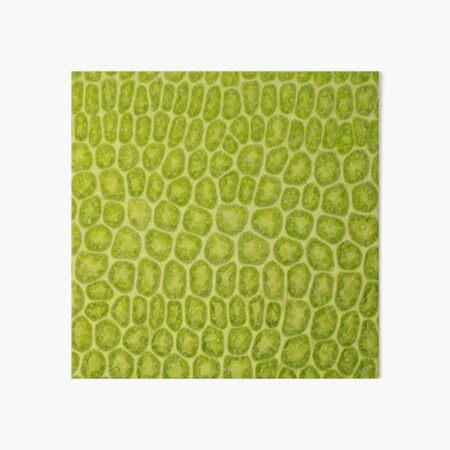 Moss leaf microscope photo - plant cells Art Board Print