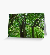 Trees in shilouette, Marlborough Sounds Greeting Card