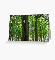Tree trunks in sunlight Greeting Card