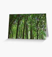 Tree trunks in sunlight, horizontal Greeting Card