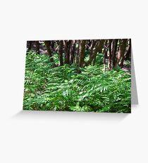 NZ fern and manuka trees  Greeting Card