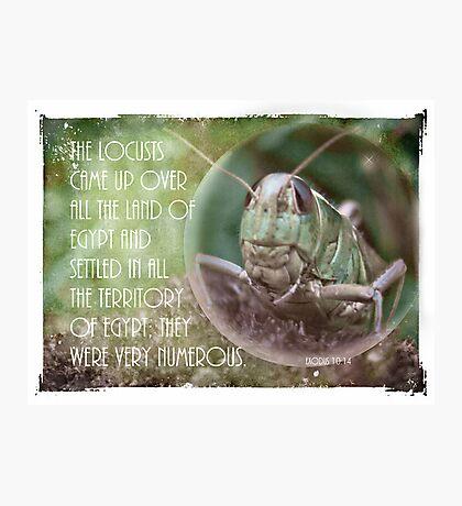 Exodus 10:14 Photographic Print